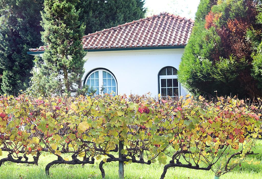 Conhecendo a vinícola Quinta de Cabriz