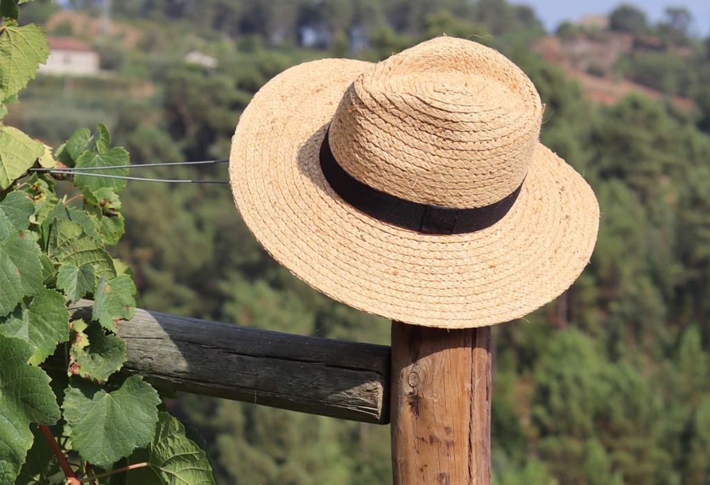 Quais são as diferenças entre viticultor, enólogo e sommelier?